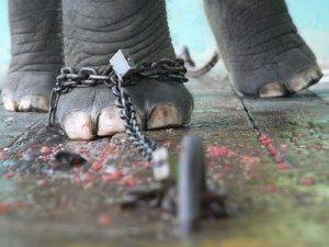 elephant-tied